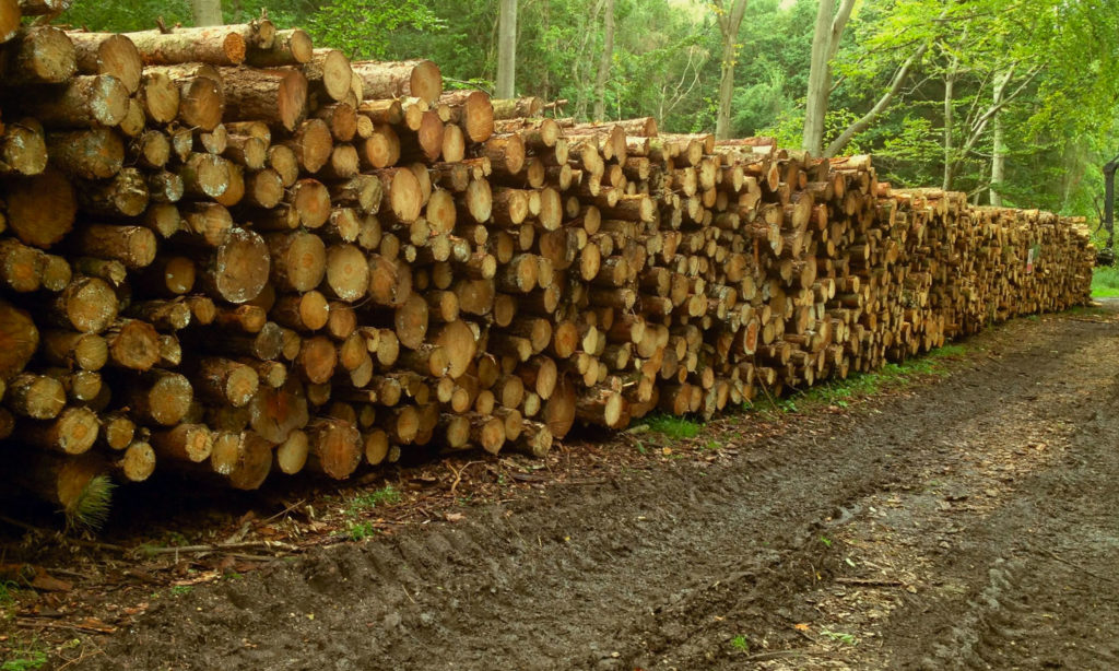 Locally sourced forestry timber