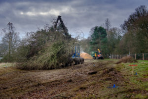 From tree clearance to wood fuel
